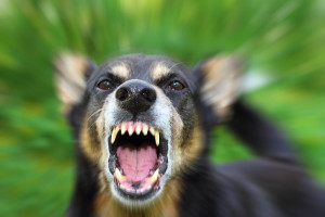 Tenant's Rights and Dog Bites